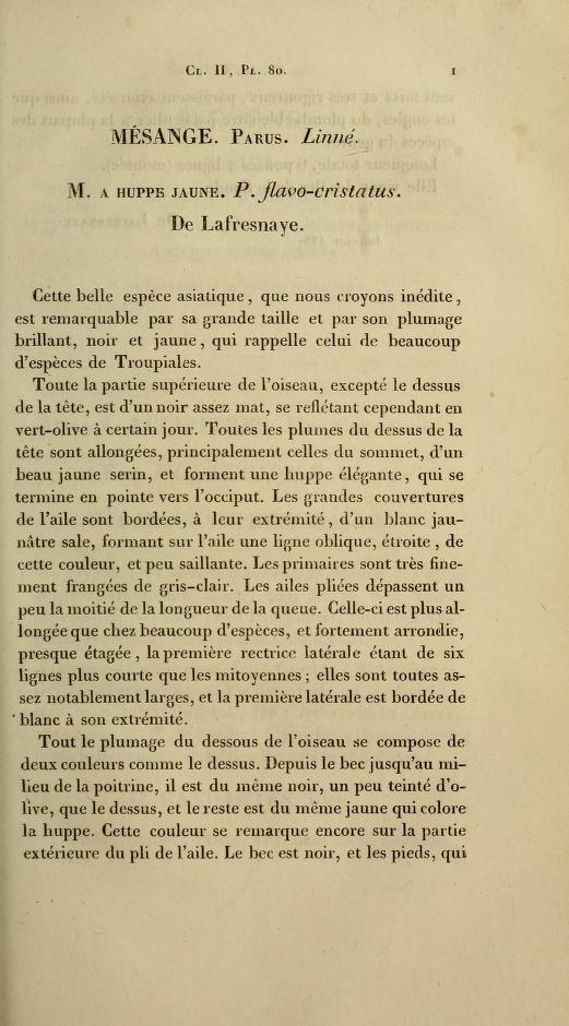 Mesange. Parus. Linne. M. A Huppe Jaune. P. flavo-cristatus.