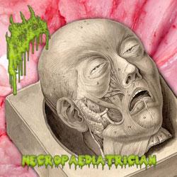 Necropaediatrician-ThumbnailCover.jpg