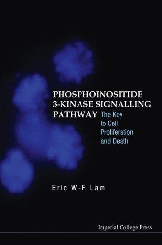 Phosphoinositide 3-kinase Signalling Pathway by Eric W-F Lam
